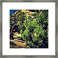 Old Desert Tree Number Two Framed Print