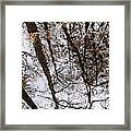 Old Growth Cypress Reflection Framed Print