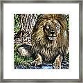 Old King Lion Framed Print