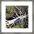 Old Rag Hiking Trail - 121243 Framed Print