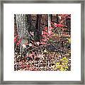 Old Rag Hiking Trail - 12125 Framed Print