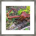 Old Rusty Bike In The Weeds 2 Framed Print