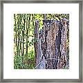 Old Stump Framed Print