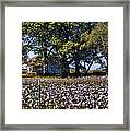 Old Time Farm And Cotton Fields Framed Print