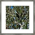 Olive Branch Framed Print