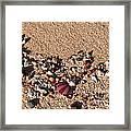 On The Beach 02 Framed Print