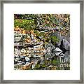 On The Edge Of The Lake Framed Print