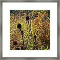 On The Prairie #4 Framed Print