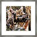 One Eyed Tomcat Framed Print
