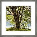 One Spring Tree Framed Print