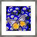 Orange And Gray Butterfly Framed Print