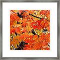 Orange And Reds And Some Yellow Too Framed Print