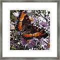 Orange Butterfly/purple Flowers Framed Print