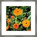 Orange Country Flowers - Series I Framed Print