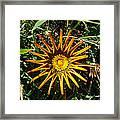 Orange Curl Framed Print