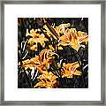 Orange Daylily Flowers On Gray 5 Framed Print