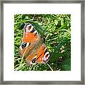 Orange Flutter Framed Print