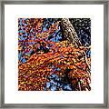 Orange Maple Framed Print