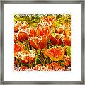 Orange Princess Fringed Tulips Framed Print