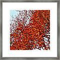 Orange Red Blanket Framed Print