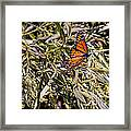 Orange Swallowtail Framed Print