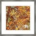Orange Trees Framed Print