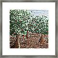 Orchard 4 Framed Print