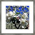 Orchard Ovation Framed Print