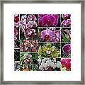 Orchid Collage 1 Framed Print