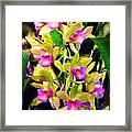 Orchid Flower Bunch Framed Print