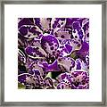 Orchid Grouping Framed Print