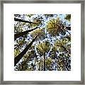Oregon Forest Framed Print