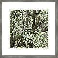 Oriental Pear Tree Framed Print