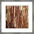 Ornamental Golden Grass Framed Print