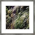 Ornamental Grass Framed Print