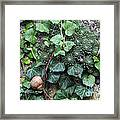 Overgrown Wall With Snail Framed Print