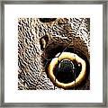 Owl Butterfly Wing Framed Print