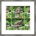 Owls Do Take Baths Framed Print