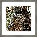 Owls From Amado Arizona Framed Print