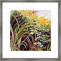 Pacific Crocosmia Framed Print