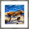 Pacific Harbor Seal Framed Print