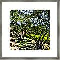 Pacifica Courtyard Framed Print