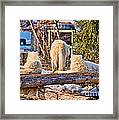 Pack Of Arctic Wolves Watching A Polar Bear Movie Framed Print