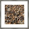 Pack Of Hound Dogs Framed Print
