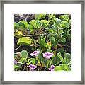 Padre Flowers Framed Print