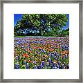 Paintbrush And Bluebonnets - Fs000057 Framed Print by Daniel Dempster