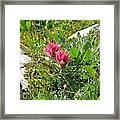 Paintbrush Spring Closeup Framed Print