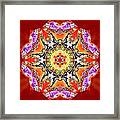 Painted Lotus Xvii Framed Print