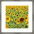 Painted Sunflower Field Framed Print