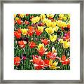 Painted Sunlit Tulips Framed Print